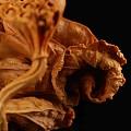 黄杨木雕刻翠鸟枯荷残荷